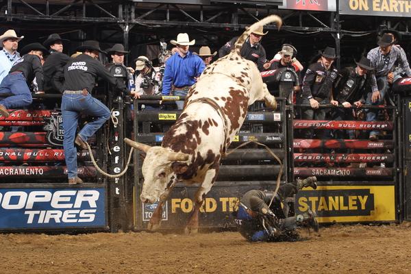 Bucking Bull and Show Bull Insurance